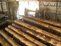 Chilean Logs